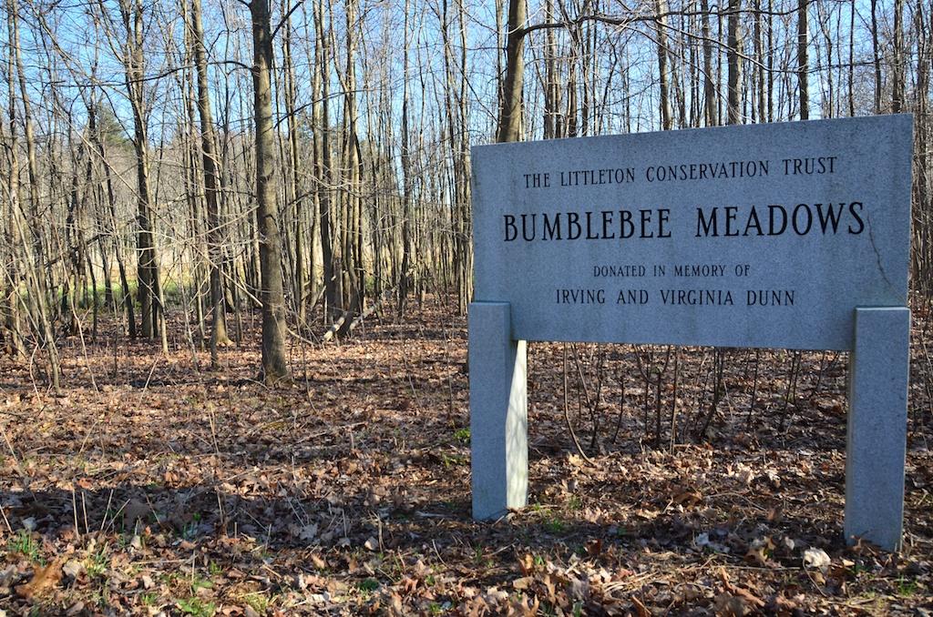 Bumblebee Meadows