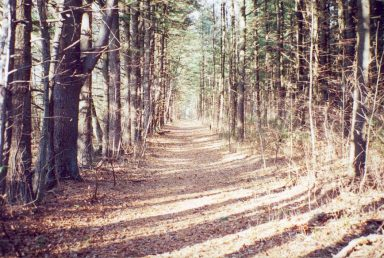 longlake-road