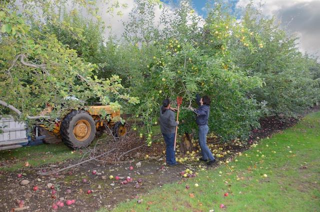 nagog-orchard