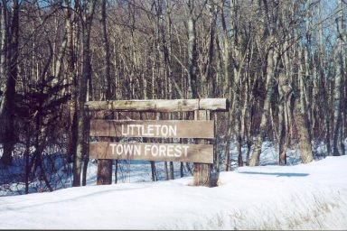 townforest-top