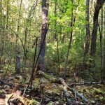 image of scrub under forest