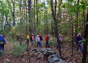 group walking in woods