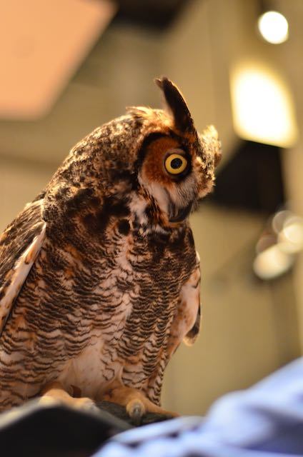 """Eyes on Owls"" following LCT's Annual Meeting"