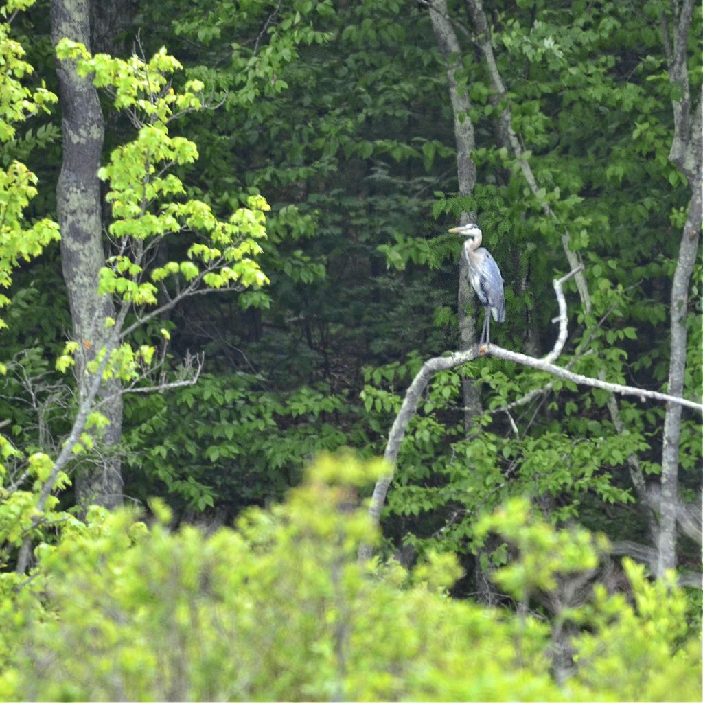 Birding / Nature Event on Williams Land and Newtown Hill Conservation Area