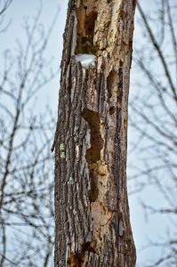 Cavities in tree