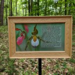 Interpretive sign about Lady Slippers